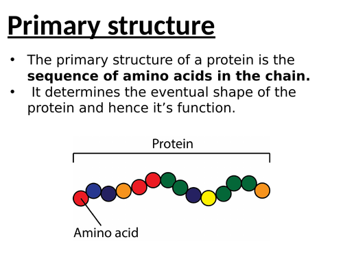 Protein structure (4 stages)