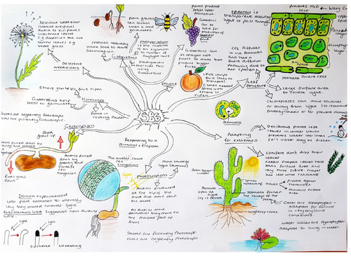 SB6 Plants Revision concept map for Edexcel biology