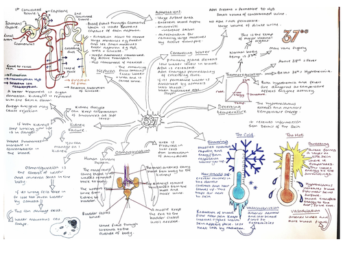 SB7 Revision mIndmap Hormones and Control, Edexcel 9 - 1 Biology