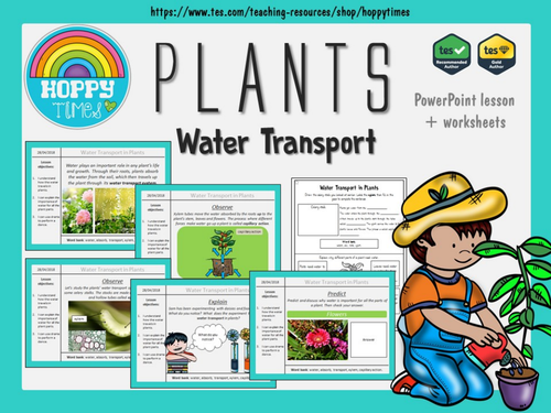 Water Transport in Plants Lesson