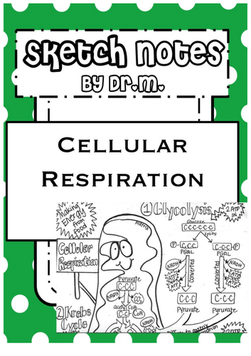 Cellular Respiration Sketch Notes