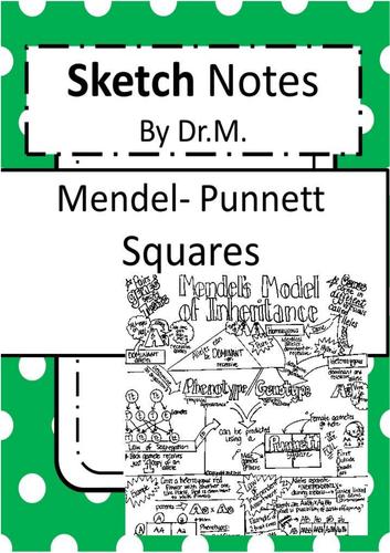 Mendel Punnett Squares  Sketch Notes