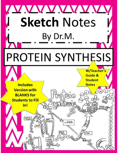 Protein Synthesis Sketch Notes