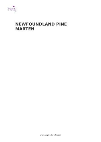 Newfoundland Pine Marten - Colouring Sheet