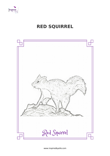 Red Squirrel Colouring Sheet