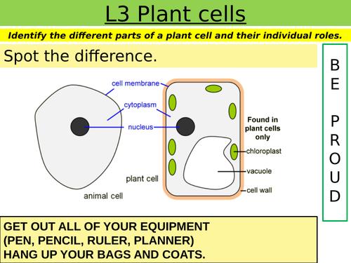 Cells: L3 Plant cells