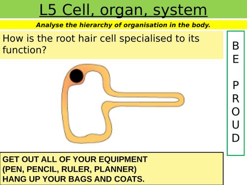 Cells: L5 Cell, organ, system