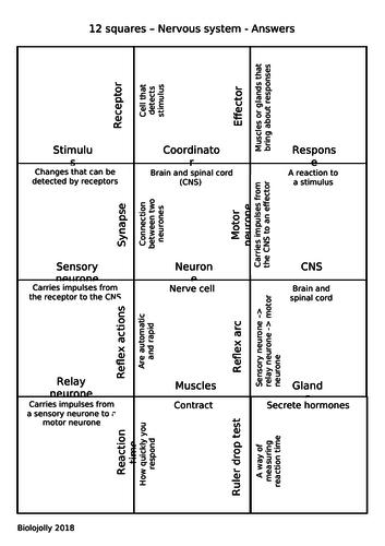 Nervous system - 12 squares