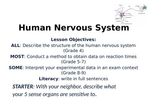 2018 AQA GCSE Biology Unit 2 (B2): Nervous System Part 1 L2
