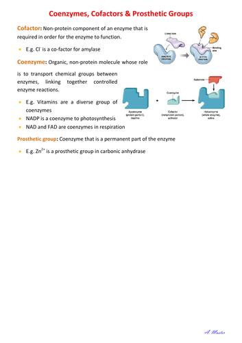 Co-enzymes, Co-factors & Prosthetic Groups