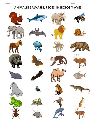 Los animales salvajes - Todo sobre los animales - Worksheet