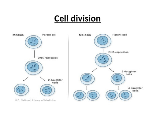 Edexcdel AS Biology - Cell division