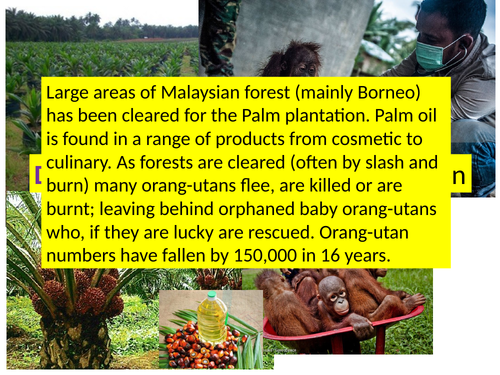 Cause and effect of deforestation in Malaysia- orangutan link