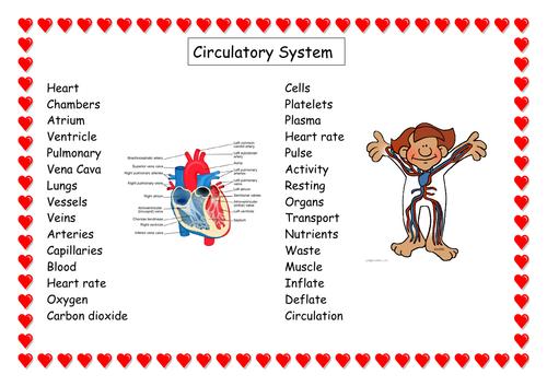 Circulatory system vocabulary word mat