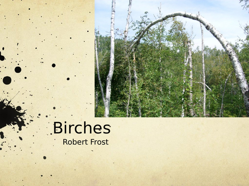Birches by Robert Frost- Poetry Analysis (A Level)