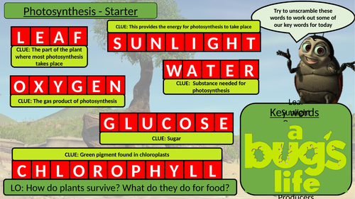 Activate 2  Lesson 1 Photosynthesis