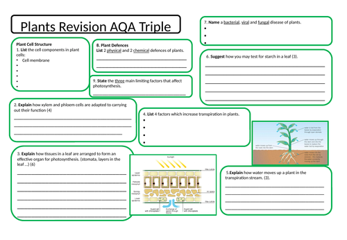 Plant life revision mind map by Hazel86 - Teaching Resources - Tes