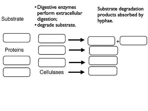 Extracellular digestion fungi gaps