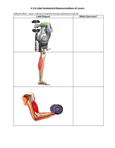 ib sehs (sport science) - 4 3 6 label anatomical representations of levers   by misterwoods   teaching resources