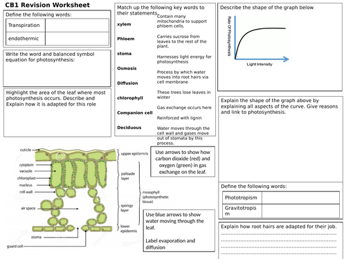 PLANT STRUCTURES AND THEIR FUNCTIONS EDEXCEL 9-1 B6 REVISION BROADSHEET