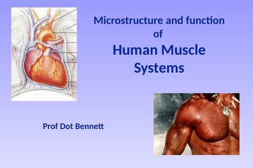 Microstructure and function of human muscle system ( full presentation )