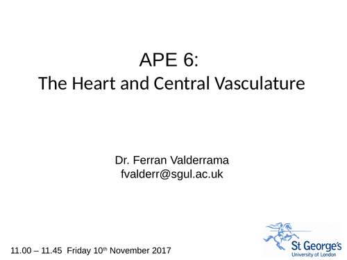 The heart central vasculature