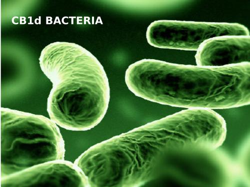 CB1d (SB1d) Bacteria Cells