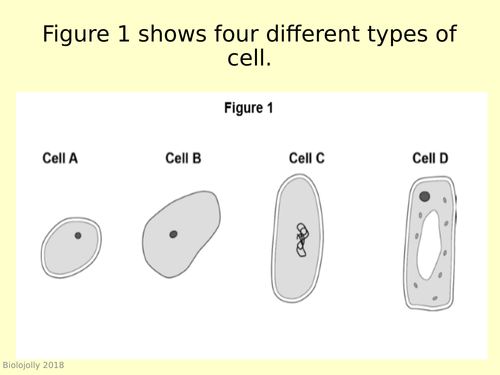 Cells - worked exam question