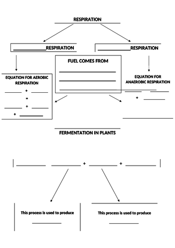 Respiration and fermentation fill the blanks flow chart