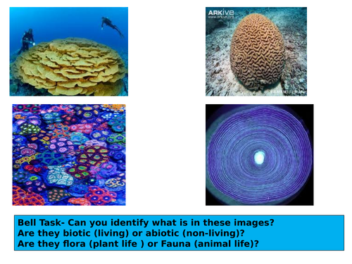 Tropical Rainforest/Andros Barrier Reef Case studies