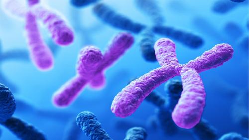 AQA GCSE Biology B6 Gene Expression and Mutation
