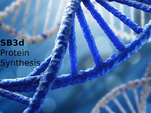 Edexcel SB3d Protein Synthesis