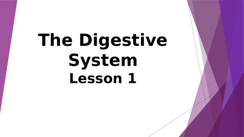Lesson 1 Digestive System