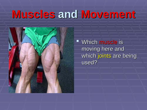 muscles and movement in sport