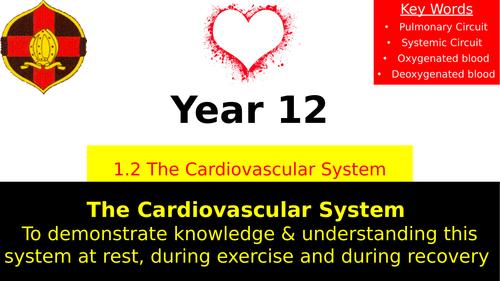 OCR A LEVEL PE- The Cardiovascular System