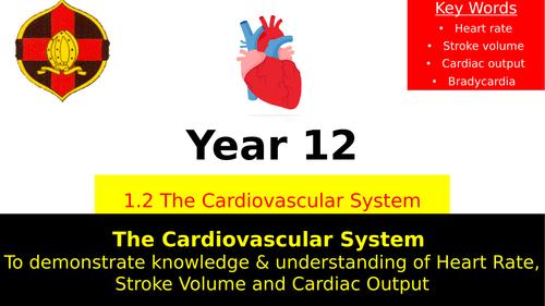 OCR A LEVEL PE- Heart Rate, Stroke Volume, Cardiac Output