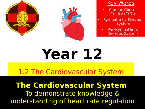 OCR A LEVEL PE- Heart Rate Regulation