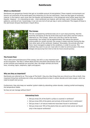 Rainforest WAGOLL Information Text