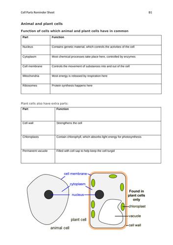 AQA GCSE Biology (9-1) B1 Double Science Revision Summary Sheets