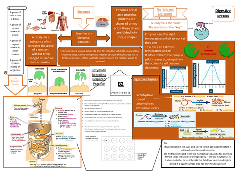 AQA GCSE Biology (9-1) B2 Double and Triple Science Revision Summary Sheets