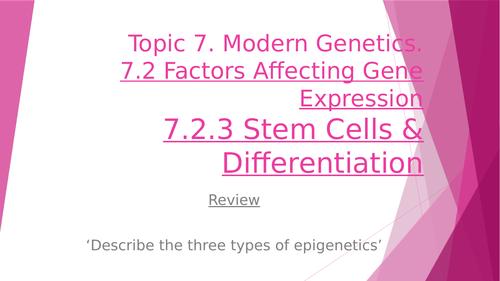 Stem Cells & Differentiation