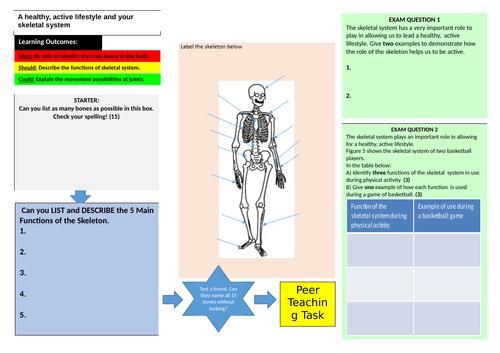 Skeletal System Learning Mat