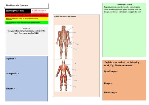 Muscular Learning Mat