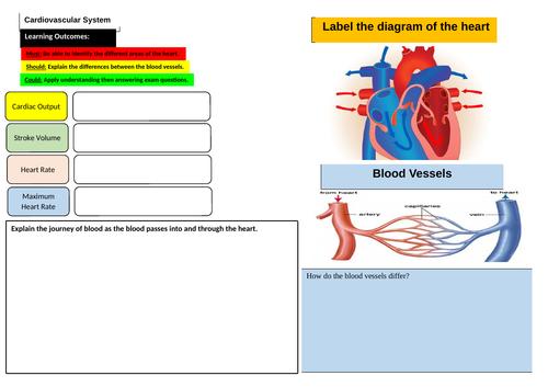 Cardiovascular System Learning Mat