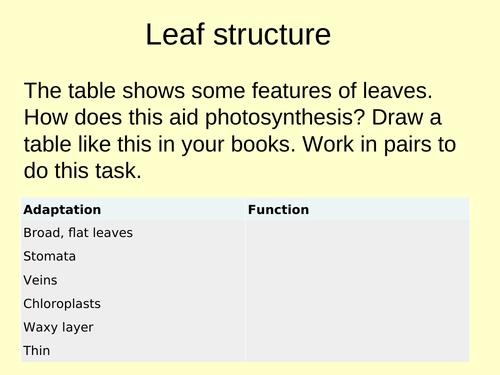 Testing Leaf for Starch (9-1) GCSE AQA