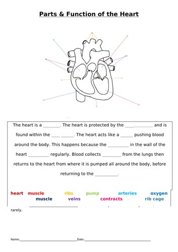SEN Heart labelling and function gap task + extension.