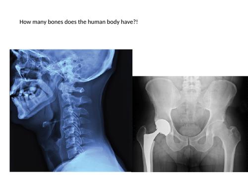 Skeleton - KS3