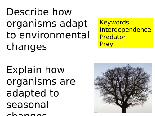 Interdependence and Predator-Prey (KS3)