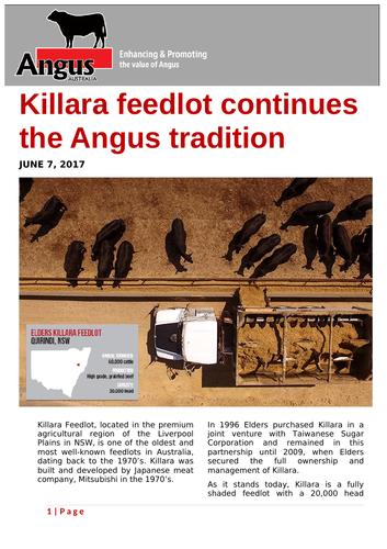 Ezine article: Killara feedlot continues the Angus tradition