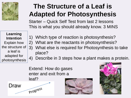 The Structure of a Leaf is Adapted for Photosynthesis Outstanding Lesson AQA GCSE Biology New 9-1